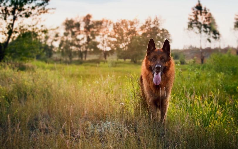 Красивые картинки Живность собакен