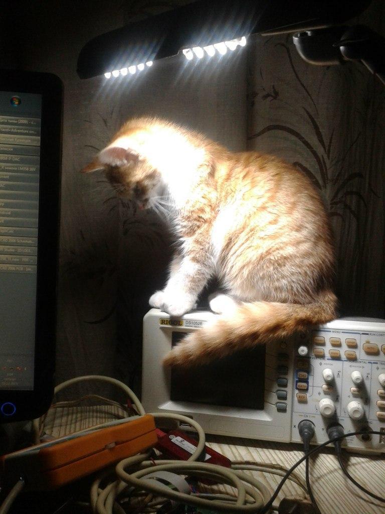 коты коты ученые Хабр