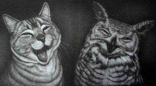 Красивые картинки Живность сова Котэ безудержное веселье партия совушек и котов