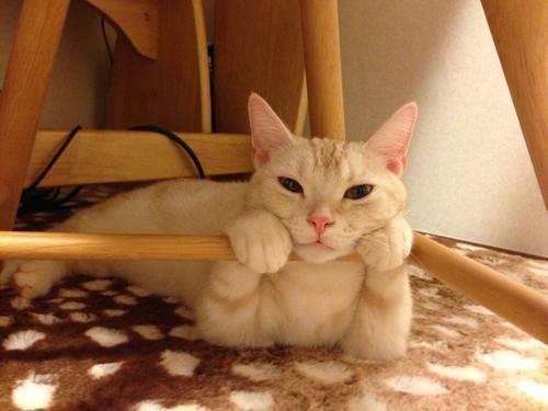 Красивые картинки Котэ кот Милота