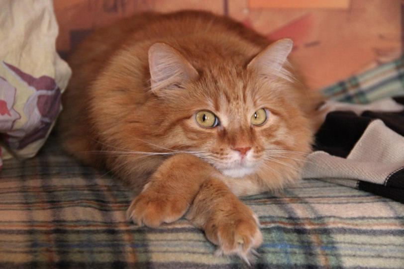Красивые картинки Котэ кот Рыжий кот