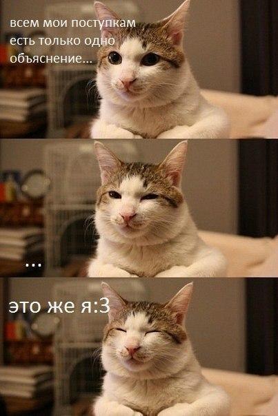 Котэ кот Милота ясно-понятно