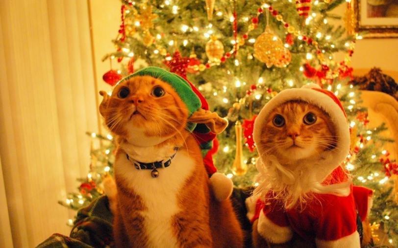 кот Милота Рыжий кот Рождество Праздник к нам приходит