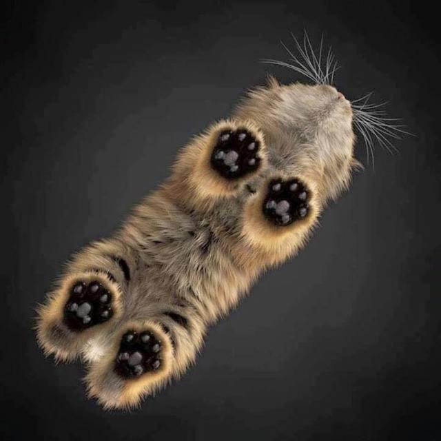 Красивые картинки кот Милота Кршачти лапы Кот-облако