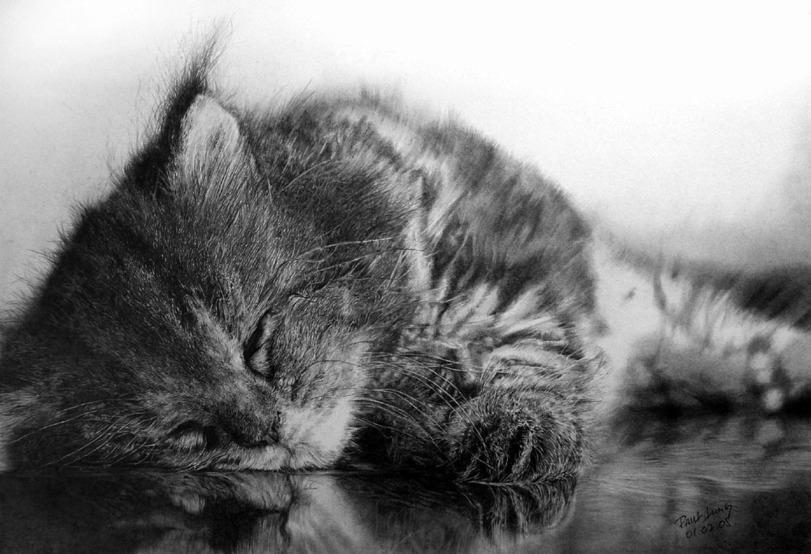 Красивые картинки Арт Котэ партия совушек и котов Милота