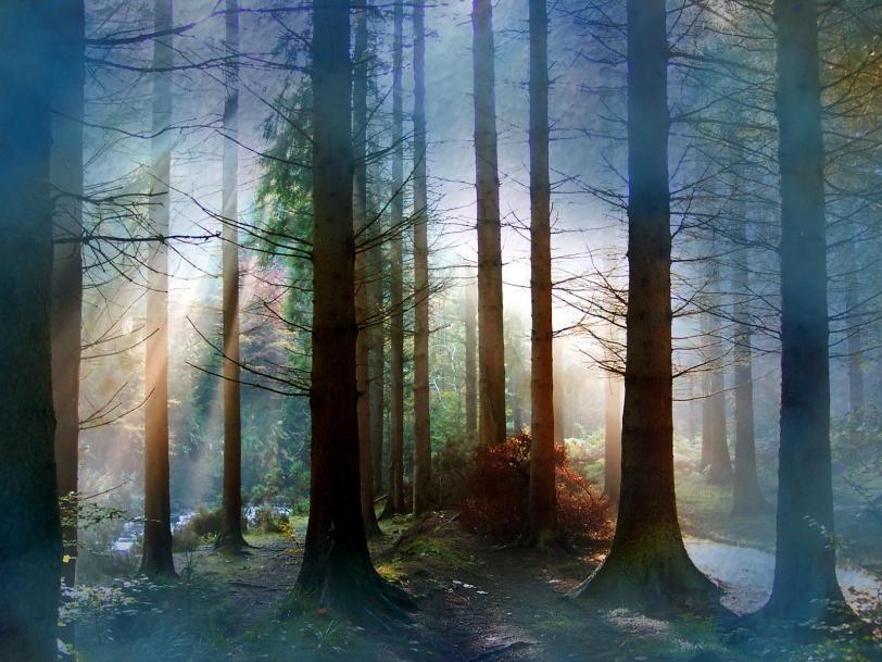Красивые картинки Обои Природа лес