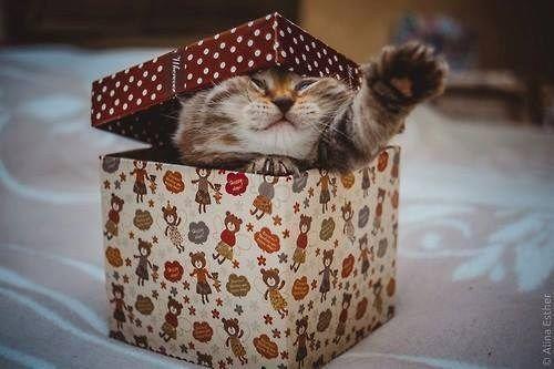 Красивые картинки Котэ Милота Коты и коробки подарки