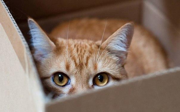 Красивые картинки Котэ кот Милота Коты и коробки