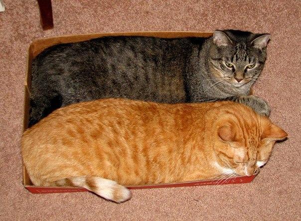 Красивые картинки Живность Котэ кот Милота Коты и коробки больше котов богу котов