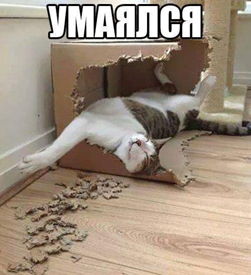 Красивые картинки Котэ кот Милота Коты и коробки коробка