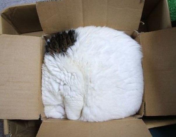 Красивые картинки Живность Котэ кот Коты и коробки коробка