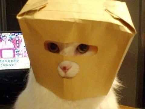 Красивые картинки Живность Котэ кот Милота Коты и коробки коробка