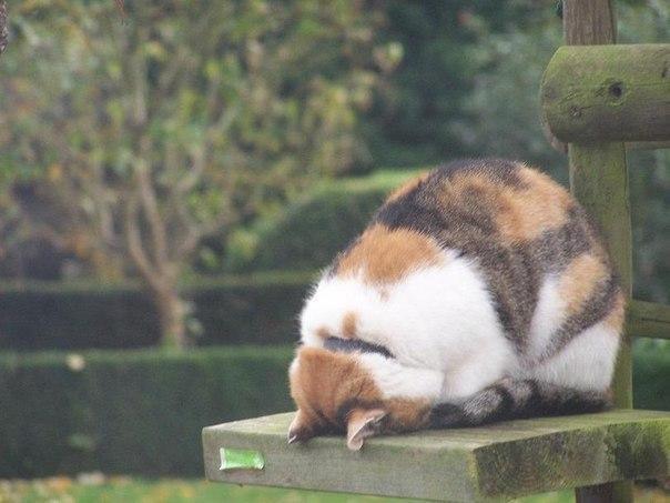 Красивые картинки Котэ кот Милота Рыжий кот