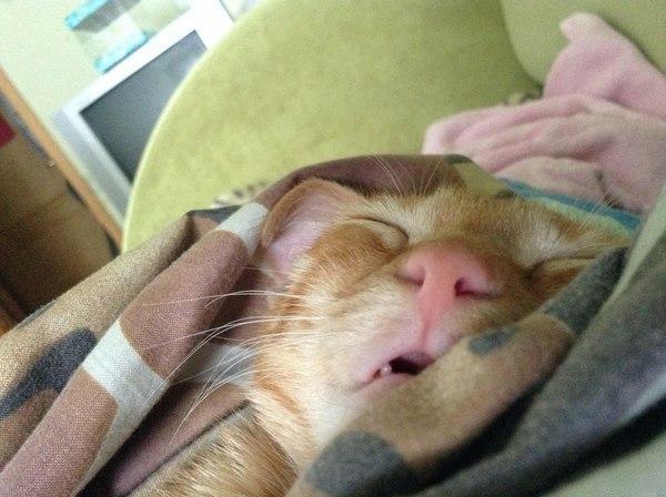 Котэ кот Милота Рыжий кот спит
