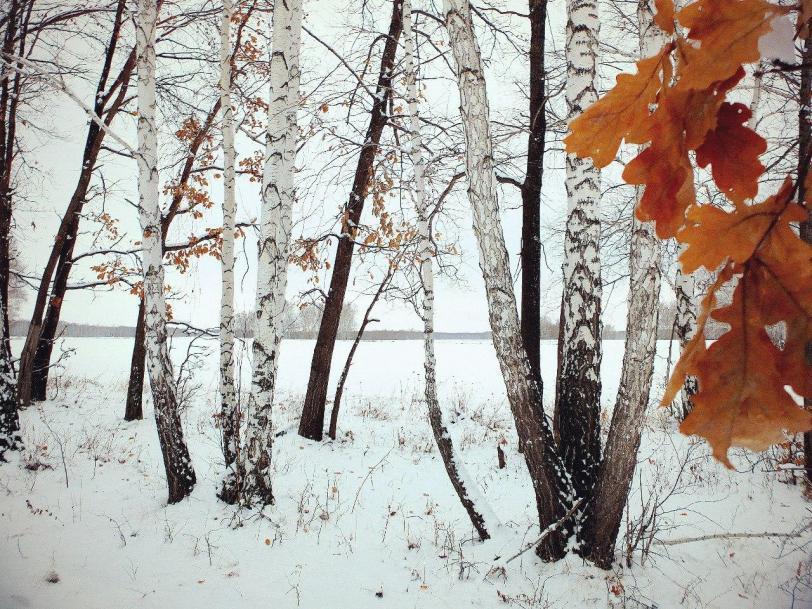 Красивые картинки Фото Пейзаж Зима