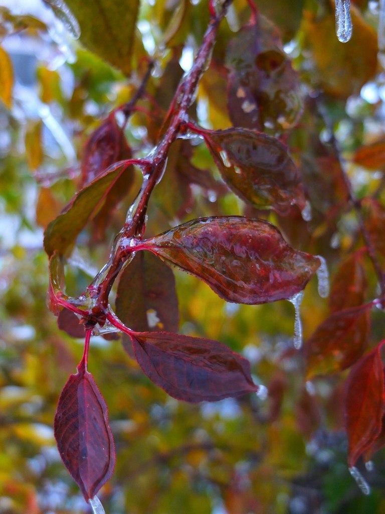 Красивые картинки Фото Природа Ледяной дождь