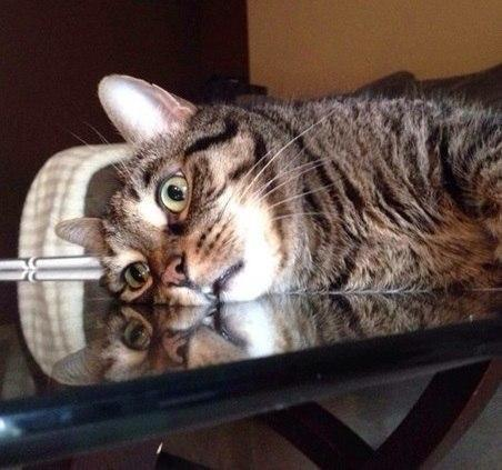 Красивые картинки Котэ кот все тлен безысходность