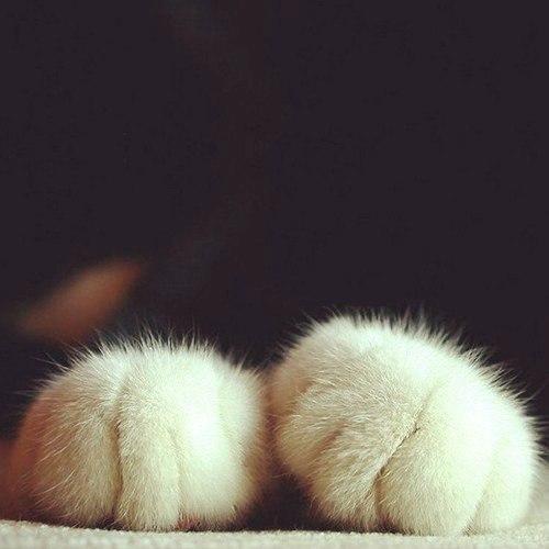 Красивые картинки Котэ кот Милота Кошачьи лапы Лапы