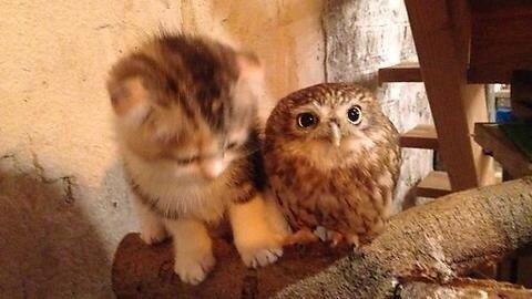 сова Котэ партия совушек и котов кот Милота Обнимашки