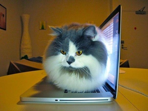 Красивые картинки Котэ кот Фото Милота