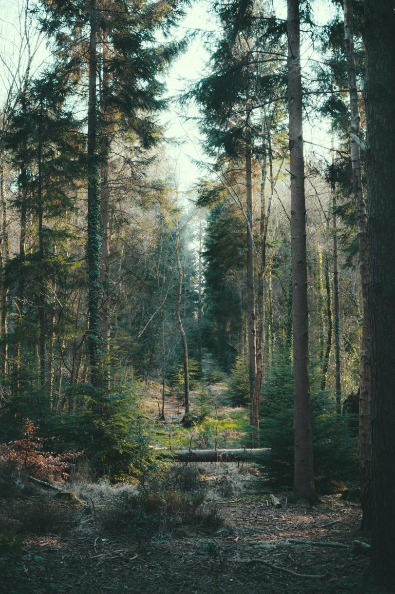 Красивые картинки Фото Природа лес