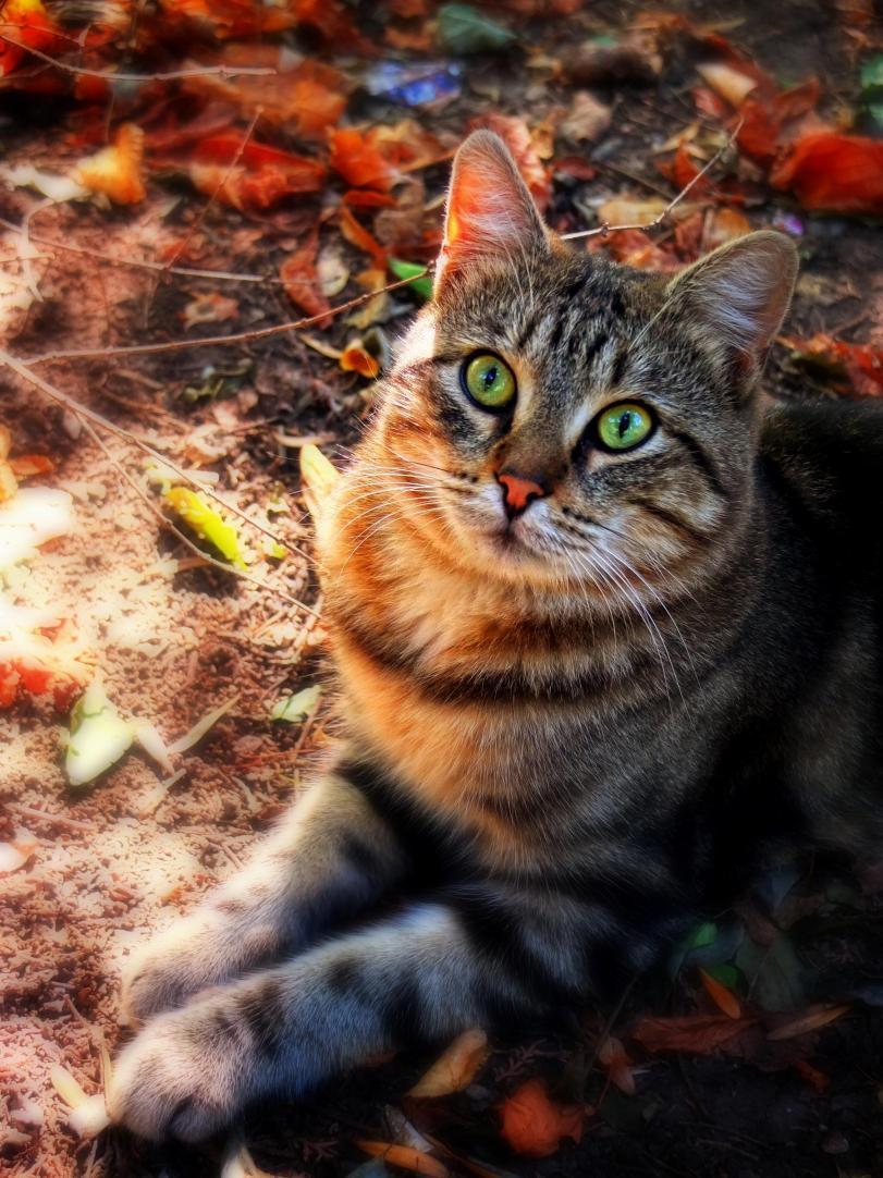 Красивые картинки Живность Котэ Фото Осень