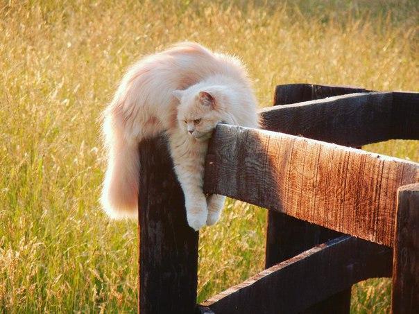 Красивые картинки Котэ кот Милота все тлен