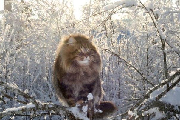 Красивые картинки Котэ кот Милота Зима Кот-облако