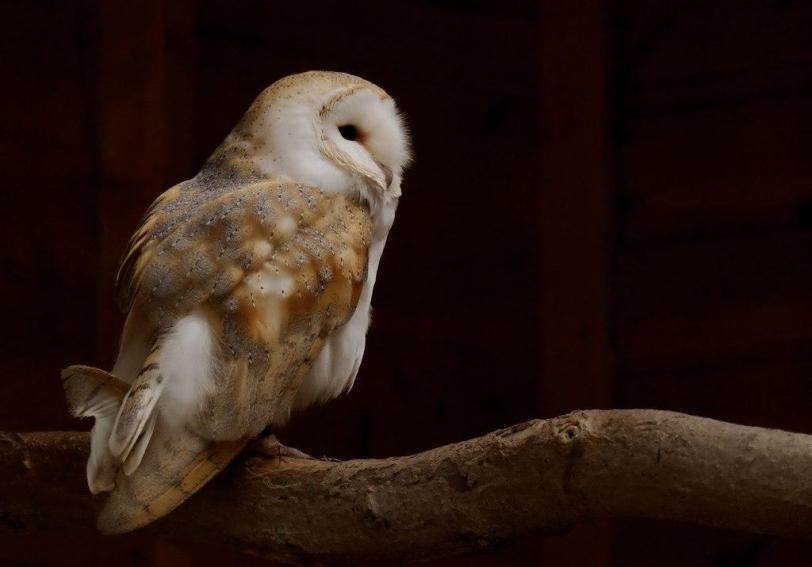 Красивые картинки Живность сова Милота