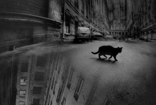 Красивые картинки Арт Котэ кот все тлен черно-белое