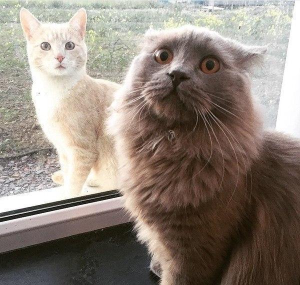 Красивые картинки Живность Котэ кот Фото удивление