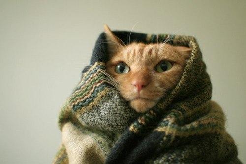 Красивые картинки Живность Котэ кот Фото Милота котяка-мерзляка
