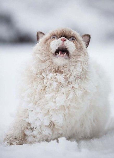 Котэ кот Милота Зима снег