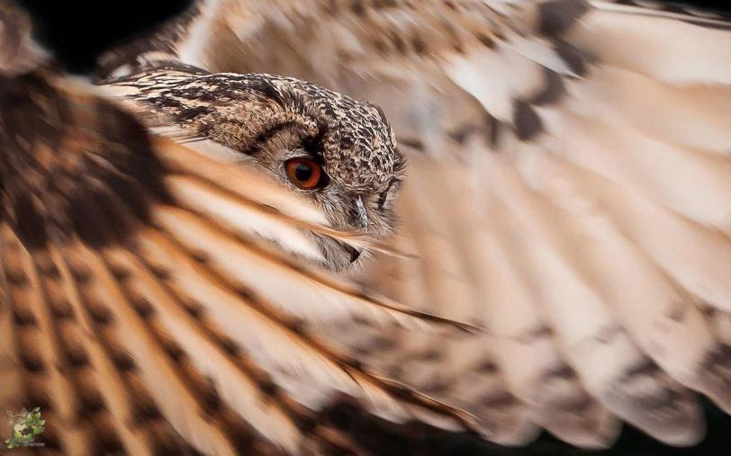Красивые картинки Живность сова