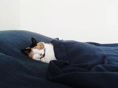 Красивые картинки Котэ кот Милота сладкие сны
