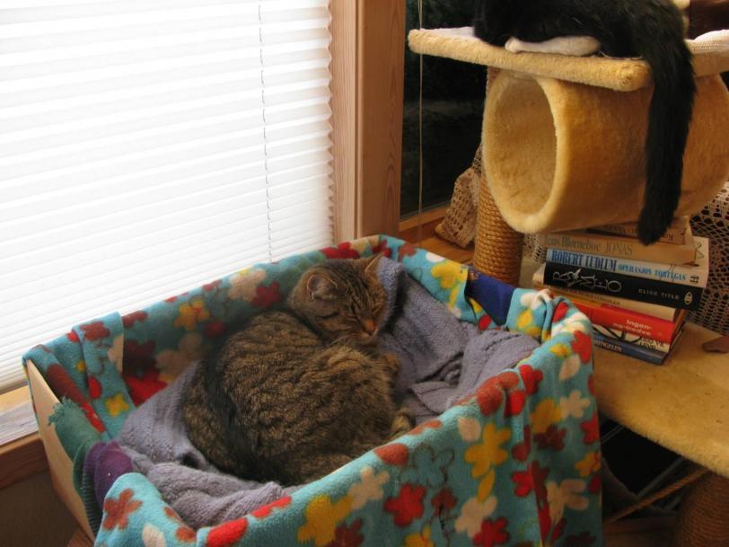 Красивые картинки Котэ кот Милота хвост