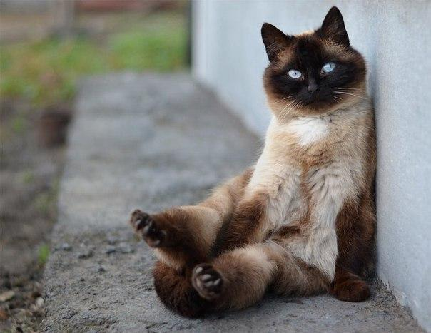 Красивые картинки Живность Котэ кот Милота толстая морда