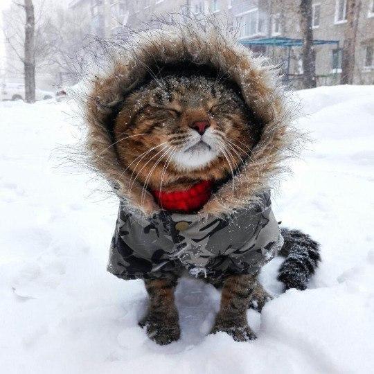 Красивые картинки Живность Котэ кот Милота котяка-мерзляка