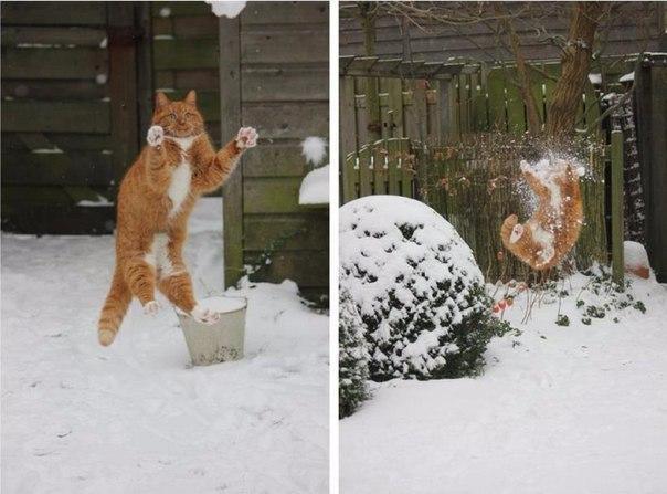 Котэ кот Милота Зима Рыжий кот снег фэйл