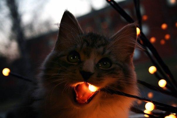 Красивые картинки Котэ кот Милота теплота внутри кота