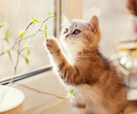 Красивые картинки Котэ кот Милота Котейка