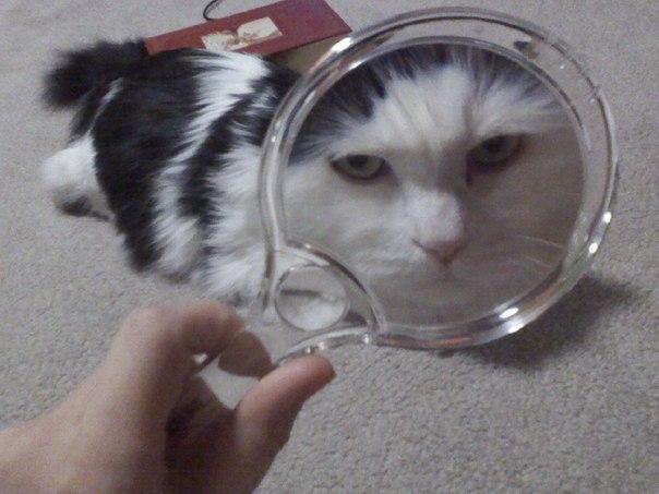 Живность Котэ кот Милота все тлен мой хозяин идиот