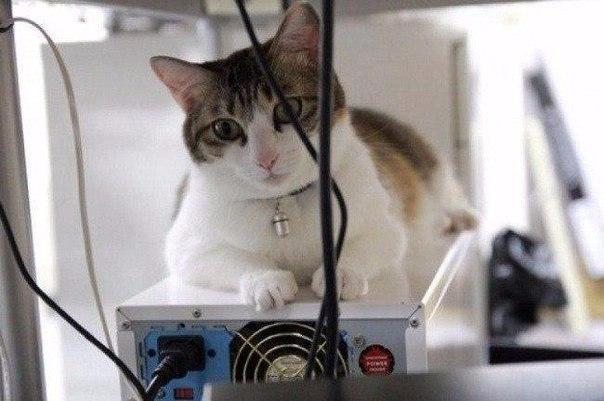 Красивые картинки коты ученые Живность Котэ кот Милота
