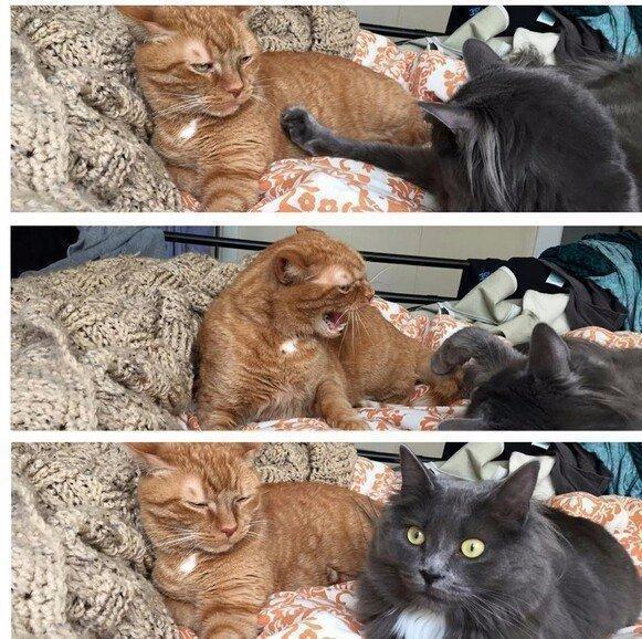 Живность Котэ кот Рыжий кот внезапно отношения