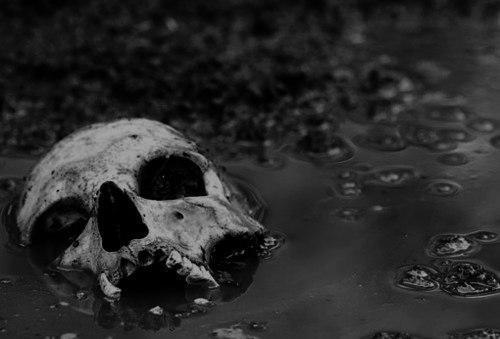 Красивые картинки Арт череп