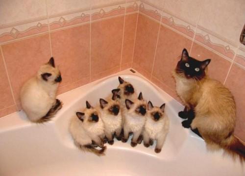 Красивые картинки Живность Котэ кот много котов