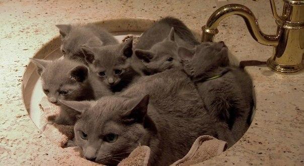 Красивые картинки Живность Котэ пучок котов вот