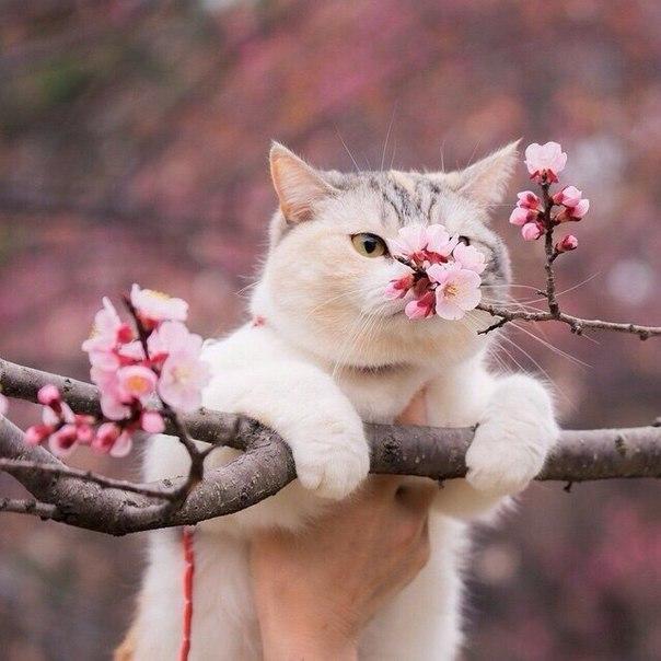 Живность Котэ кот Милота вишня