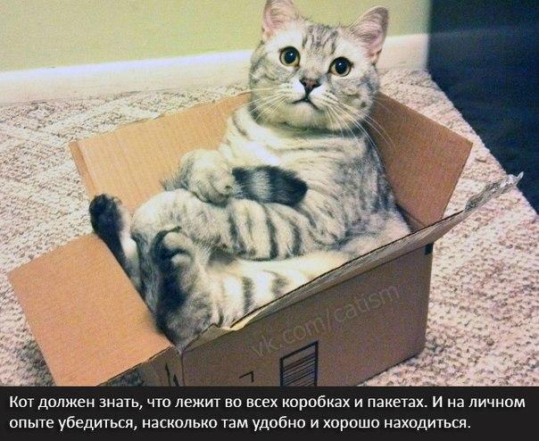 Красивые картинки Живность Котэ кот Коты и коробки  VK Cotism