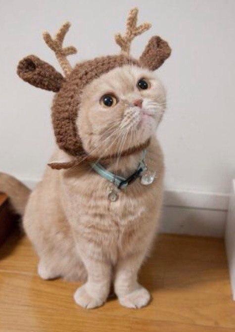 Красивые картинки Живность Котэ кот Милота Рождество